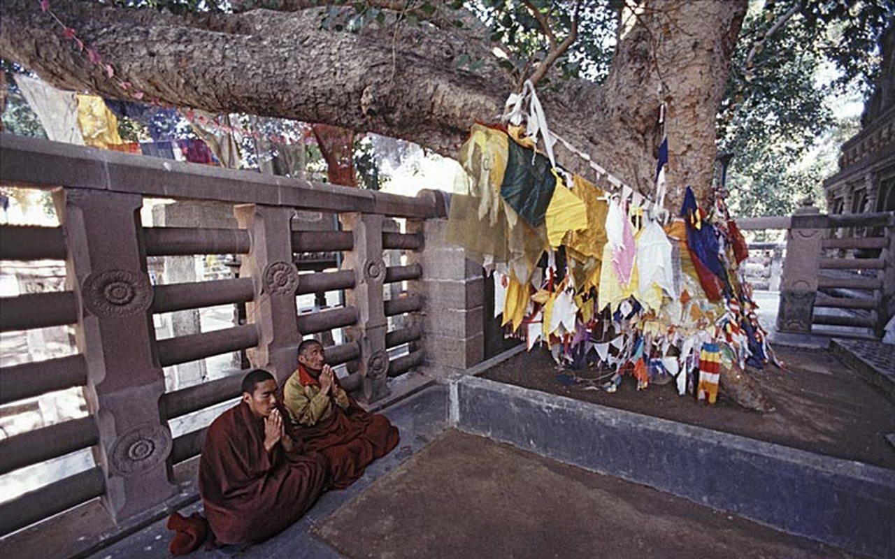 boddhi tree